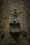 Bird house deep in the forest. Wild bird birdhouse stock image