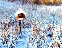Bird house. Designed actually for ducks, but also other birds use it. Covered with snow during winter royalty free stock image