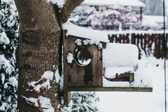 Bird house and feeder on a tree in a garden in winter, covered in snow. Selective focus Stock Photo