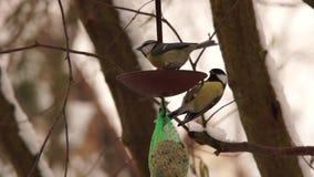 Bird house. Feeding birds at a bird house stock video