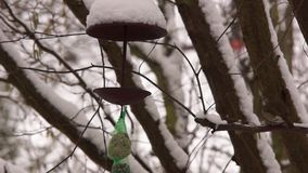Bird house. Feeding birds at a bird house stock footage