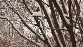 Bird house. Feeding birds at a bird house stock video footage