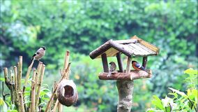 Bird house feeding place in the garden