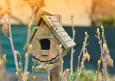 Bird house and the first spring gentle leaves. royalty free stock photography