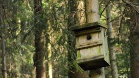 Bird house stock video footage