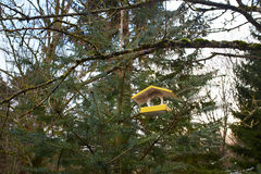 Bird house on forest Stock Photos
