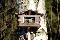 Bird house in forest autumn big tree Royalty Free Stock Images