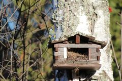 Bird house in forest autumn big tree Royalty Free Stock Image