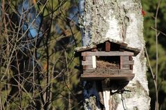 Bird house in forest autumn big tree Stock Photos