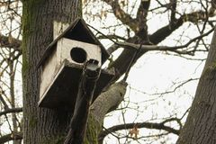 Bird house in the forest. Woods royalty free stock image