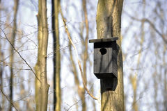 Bird house in the forest Royalty Free Stock Photography