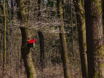Bird house in the forest Royalty Free Stock Photos