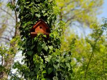 Bird house in a forest on a sunny day stock photo