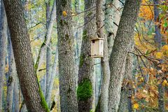 Bird house in the forest on the tree. In autumn day stock images