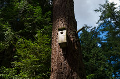 Bird house in forest. Wooden bird feeder in trees Stock Photography