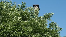 A Bird house in a garden bush stock video footage