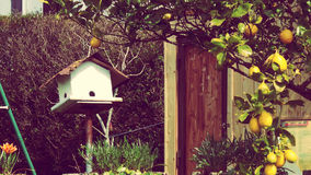 The bird house. Garden with wood birdhouse and lemon tree Stock Images