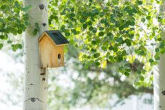 Bird house in grove of quaking aspens. Small wooden bird house on aspen tree royalty free stock photography