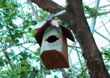 Bird house hanging from the tree Royalty Free Stock Images