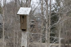 Bird house hanging from the tree with the entrance hole in the shape of a circle.  royalty free stock photos