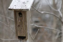 Bird house hanging from the tree with the entrance hole in the shape of a circle.  stock photos