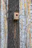Bird house hanging from the tree with the entrance hole in the shape of a circle in autumn forest. Telephoto shot stock image