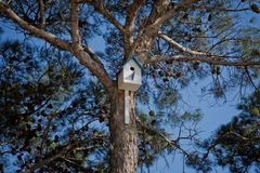 Bird house hanging from the tree with the entrance hole in the shape of a circle. Azerbaijan Baku .Sky birdhouse on a tree in a gr stock photography