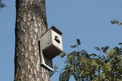 Bird house hanging on the tree in front of blue sky Royalty Free Stock Photos