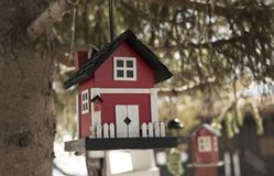 Cute bird house in a tree royalty free stock photos