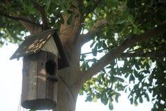 Bird House on the Ivory Coast Almond. Bird House on the Ivory Coast Almond in the summer royalty free stock image