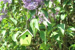 Bird house in the lilac. The picture shows a bird house in the garden stock photos