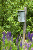 Bird House in the Lupine. Vertically cropped photograph of a bird house in a field of wild lupine with a Tree Swallow peeking out of the nest box Royalty Free Stock Photography