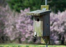 BIrd House and Magnolias Stock Photo