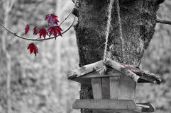 Bird house. And maple leaves desaturated stock photography