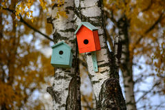 Bird house nesting-box hang on birch tree trunk. Green bird house nesting-box hang on old birch tree trunk and branches move in wind Royalty Free Stock Photography
