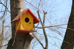 Bird house. Nice tree bird house in a park royalty free stock image