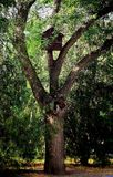 Bird house on an old tree Royalty Free Stock Photos