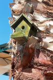 Bird House on the palm on blue Royalty Free Stock Photography