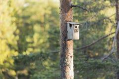 Bird House on Pine Tree Stock Photo