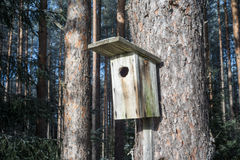 Bird house on a pine tree. Wooden aviary of timber. Nest box Stock Photo