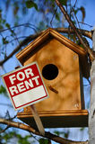 Bird house for rent. Bird house in tree lokking for renters Stock Image