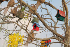 Bird house. A Bird`s House on a Tree a Tiny handmade house or shelter for Little Birds. protecting them from Hot Summer and Cold Winter royalty free stock images