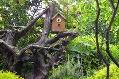 Bird house. Small bird house in the garden stock photos