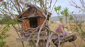 Bird house in spring on tree stock footage