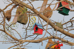 Bird house. On the tree royalty free stock images