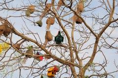 Bird house. On the tree stock photography