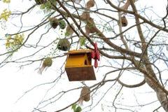 Bird house. On the tree stock photo