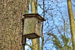 Bird house in tree Royalty Free Stock Images