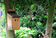 Bird house in a tree Stock Images