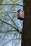 Bird house on tree at spring. Leaves blooming royalty free stock photos